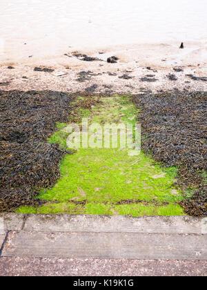 seaweed below steps at seaside front onto mudflats river; England; UK - Stock Photo