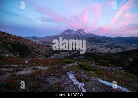 Mount Saint Helens with Wildflowers in Bloom - Stock Photo