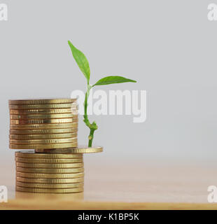 row of money coins with  tree grow up, concept in save, finance and investment in business - Stock Photo
