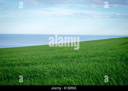 Farm field leading to the sea, south Devon - Stock Photo