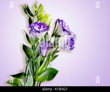 Bouquet of purple with white Eustoma (Lisianthus) flowers on a tender lilac  background - Stock Photo