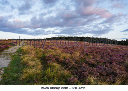Sunrise in summer near Swainby along the route of the Cleveland Way National Trail on the North York Moors in North - Stock Photo