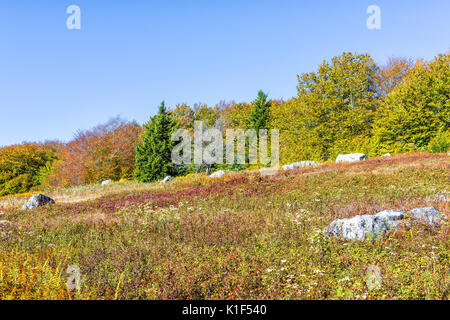 Rocky landscape meadow hill in Dolly Sods, West Virginia in autumn - Stock Photo