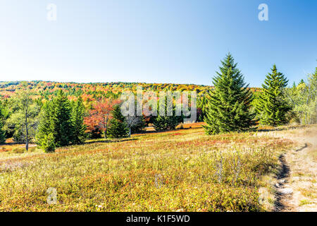 Rocky landscape meadow hill in Dolly Sods, West Virginia in autumn with trail path - Stock Photo