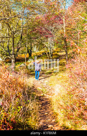 Young woman standing on trail path in autumn forest on hill in Dolly Sods, West Virginia - Stock Photo