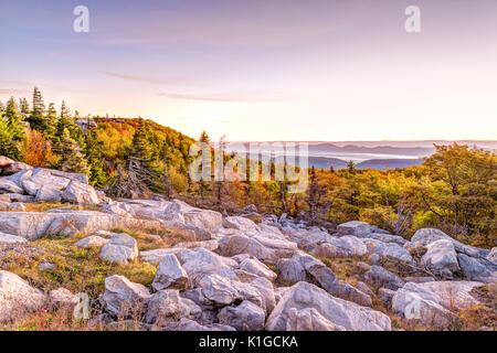 Bear rocks sunrise during autumn with rocky landscape in Dolly Sods, West Virginia with orange trees - Stock Photo