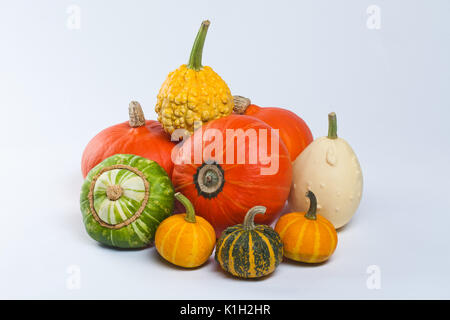 Different kinds of pumpkins. Pumpkin Varieties. Colorful pumpkins. Halloween. - Stock Photo