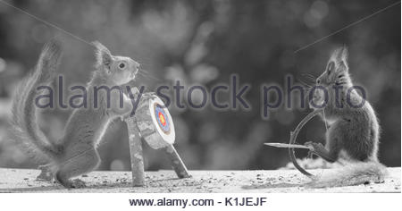 Red squirrels holding a Bow and Arrow with Target in black and white - Stock Photo