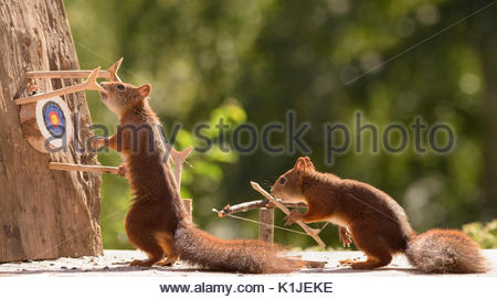 Red squirrels holding a catapult with Target Sports - Stock Photo