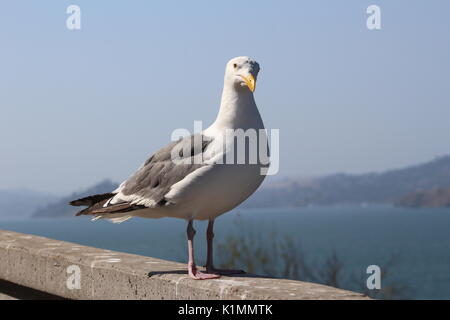 Seagull on a wall - Stock Photo