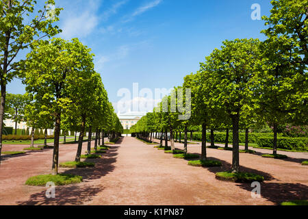 Converging rows of trees of Upper Gardens in Petrodvorets, Peterhof, Russia - Stock Photo