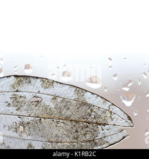 Translucent leaf and rain drops on window glass - Stock Photo