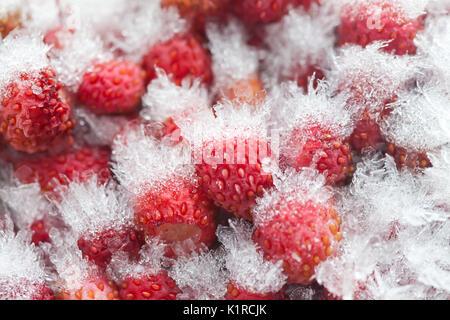 Frozen wild strawberries macro view - Stock Photo