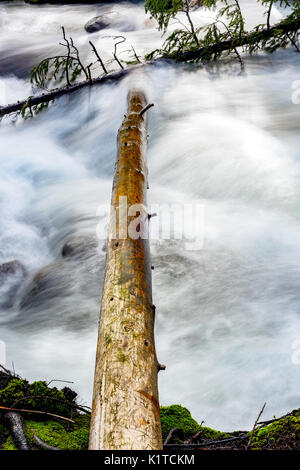 Dead tree with water of a creek rushing by - Stock Photo