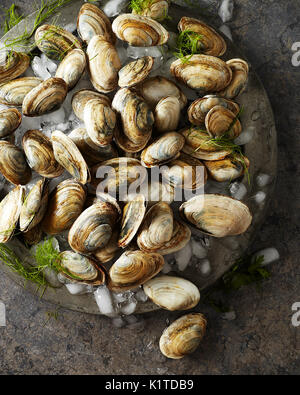 Raw whole clams on crushed ice sitting on an antique silver platter - Stock Photo