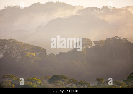 Damp rainforest at sunrise in Soberania national park, Republic of Panama. - Stock Photo