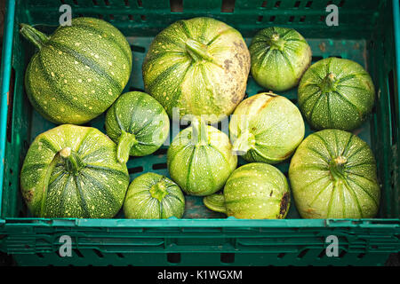 Young acorn green squash in green container on food market - Stock Photo
