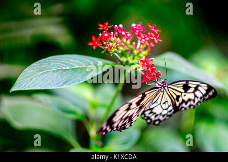 Butterfly garden at the Natural History Museum in London - Stock Photo