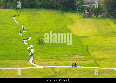 A wobbly concrete path through framers green rice fields for visitors and tourists, Tengah Sawah Ngarai Sianok, - Stock Photo