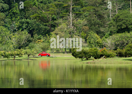 A classic bright red VW Volkswagen Beetle parked in a out of place setting of a tropical forested park by a lake, - Stock Photo