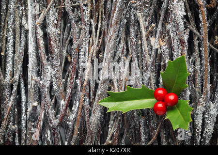 Christmas holly on pile of branches covered in frost - Stock Photo