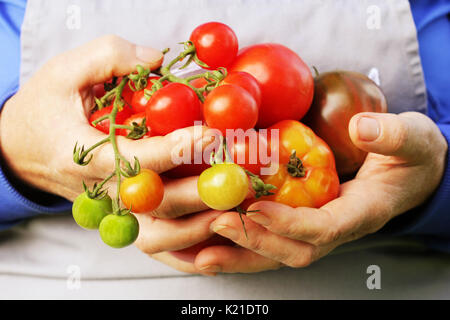 Fresh Organic red ,yellow, orange and green tomato . Colorful organic tomatoes in farmers hands - Stock Photo