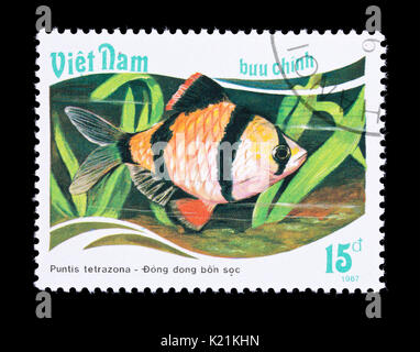 Postage stamp from Vietnam depicting a tiger barb (Puntis tetrazona) - Stock Photo