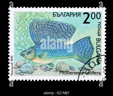 Postage stamp from Bulgaria depicting a Sailfin Molly or Yucatan molly (Poecilia velifera) - Stock Photo
