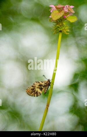 Gaiano,Parma,Emilia Romagna,Italy A Zerynthia recovery with the aim meyer Trioplan - Stock Photo