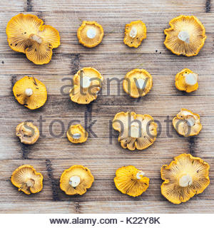 Chanterelle mushrooms organized neatly on wood background, top view - Stock Photo