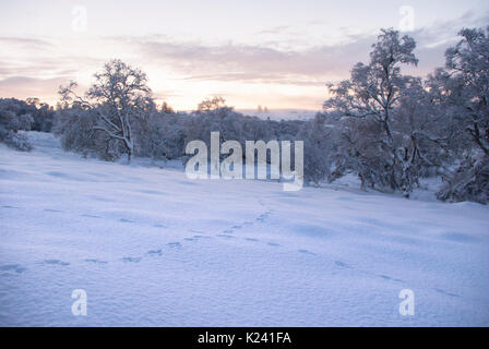 Rural countryside landscape with rabbit tracks in thick snow on a clear  winters day, Rogart, Sutherland, Highlands, - Stock Photo