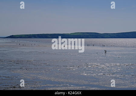 Weston-super-Mare, UK. 28th August, 2017. UK weather: swimmers ignore warning signs and walk across mudflats to - Stock Photo
