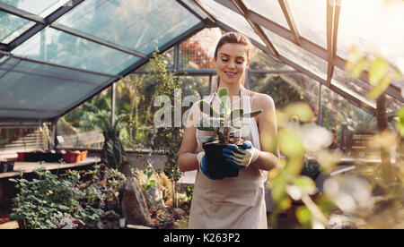 Female gardener carrying cactus plant in greenhouse. Female worker working at garden center. - Stock Photo