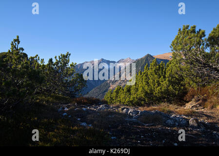 view from a hiking trail between conifers, Bavaria, Germany - Stock Photo