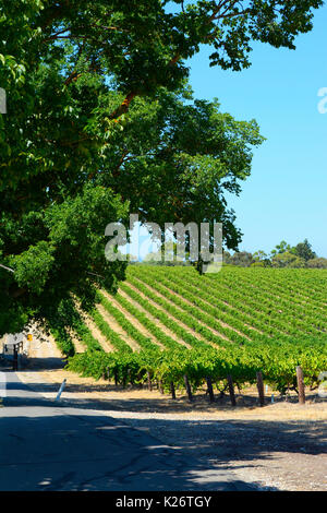 Scenic rows on grapevines taken in the Barossa Valley, South Australia, vertical orientation. - Stock Photo