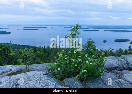 View of lake Pielinen, from Ukko-Koli hill in Karelia, Finland. Rock and rowan this side, overcast. - Stock Photo