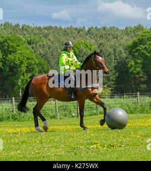 Police woman riding bay horse playing game of horse football in rural area near Etal in Northumberland, England - Stock Photo