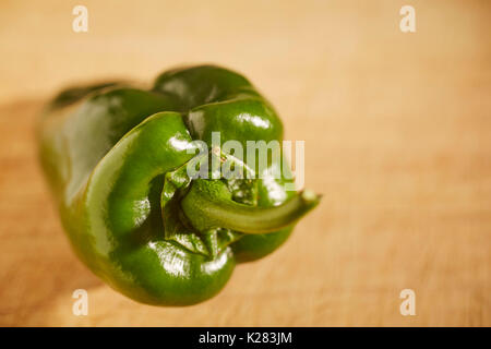 A fresh, whole poblano pepper - Stock Photo