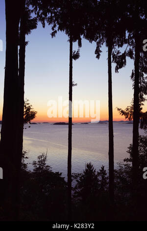 Sunset sky over the ocean nature scenery view through tall cedar trees framed by branches. Strait of Georgia, Salish - Stock Photo