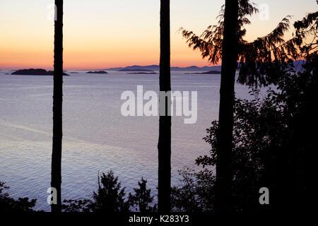 Sunset sky over the ocean nature scenery view through tall cedar trees. Strait of Georgia, Salish Sea, Pacific Ocean - Stock Photo