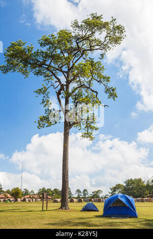 Base Camp Stoel.Pine Tree And Tents On Base Camp Stock Photo 156319528 Alamy