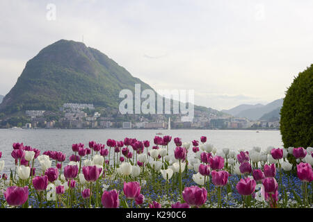 View from Lugano lake from the garden in the shore with beautiful flowers - Stock Photo