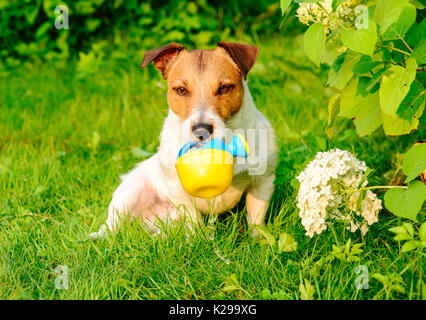 Dog as amusing gardener pouring water from watering can - Stock Photo