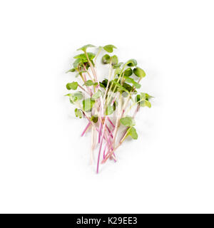 Heap of radish micro greens on white background. Healthy eating concept of fresh garden produce organically grown - Stock Photo
