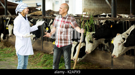 Professionals couple of vets working with milky cows in cowhouse outdoors
