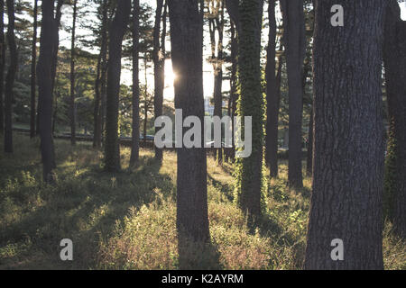 Sunlight coming through trees in the woods - Stock Photo