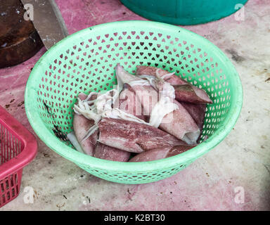 Fresh squid pile in the plastic basket before the preparation for the cooking in the local market,Thailand. - Stock Photo