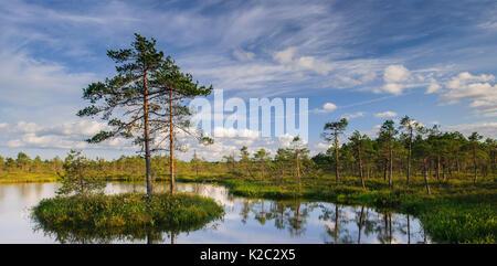 Small island with Scots pine (Pinus sylvestris) in bog pool, Tartumaa, Estonia, June. - Stock Photo