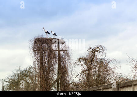 storks in the nest on the pole early spring arrived the birds - Stock Photo