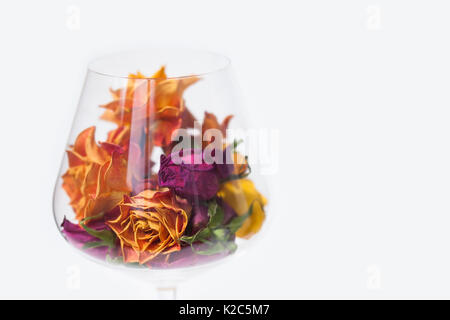 Dried rose flowers in wine glass, white background. orange yellow violete flower petal macro view, copy space, soft - Stock Photo